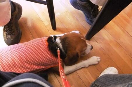 愛犬、ドッグカフェCANDYにて