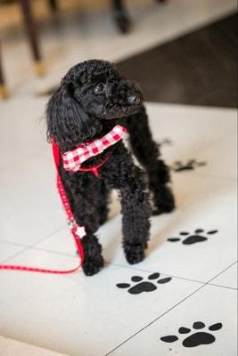 式場につけてもらった足跡と愛犬