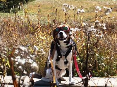 愛犬、入笠湿原にて