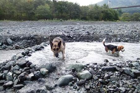 愛犬達、水無川にて