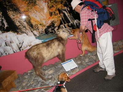 カモシカと愛犬