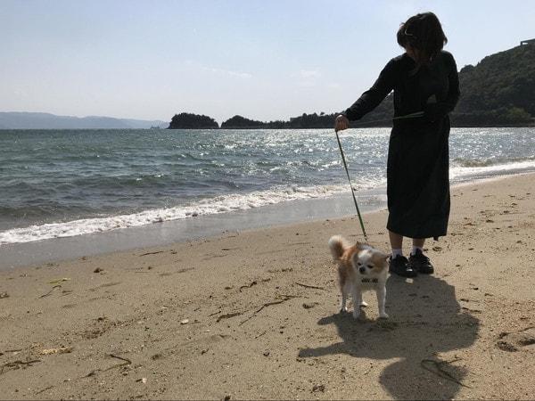 直島の浜辺を散歩する愛犬マメぞう