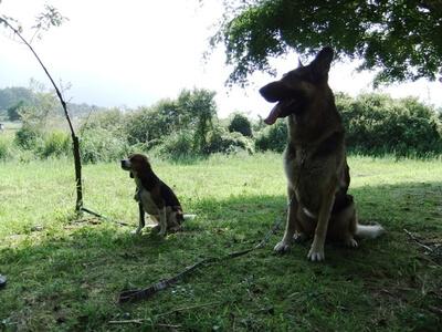 愛犬達、本栖湖湖畔にて