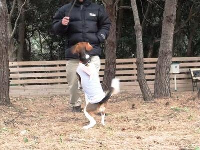 仔犬のワルツドッグランで遊ぶミックス犬