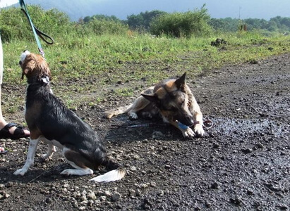 愛犬達、本栖湖にて