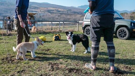 水鉄砲やおもちゃで飼い主と一緒に遊ぶ愛犬