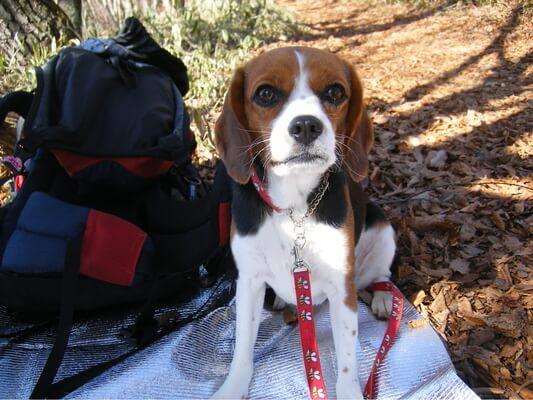 愛犬、パノラマ台山頂にて