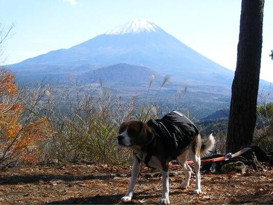 愛犬、パノラマ台ハイキングコースにて