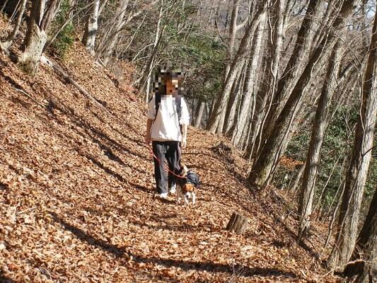 パノラマ台ハイキングコースを歩く人とミックス犬