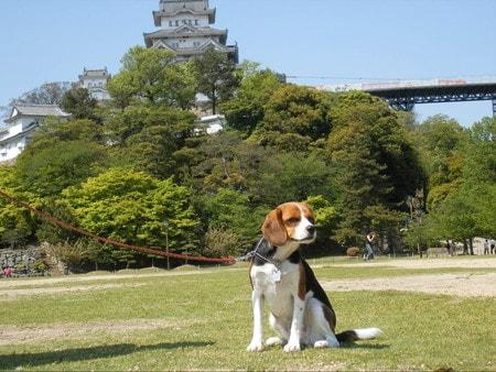 愛犬、姫路城にて