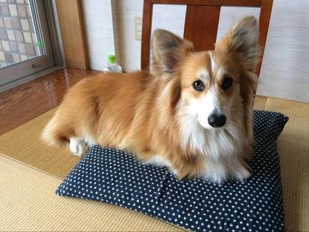琉球畳のお座敷でひとやすみ