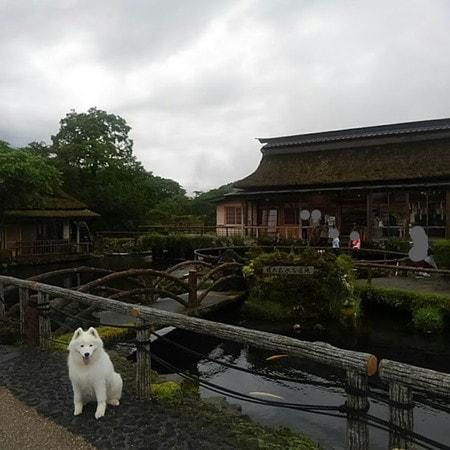 水車小屋とお土産屋さんとサモエド犬