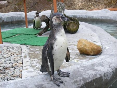 那須どうぶつ王国のペンギン
