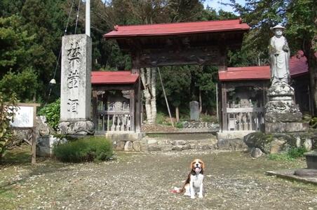 愛犬、西福寺前にて