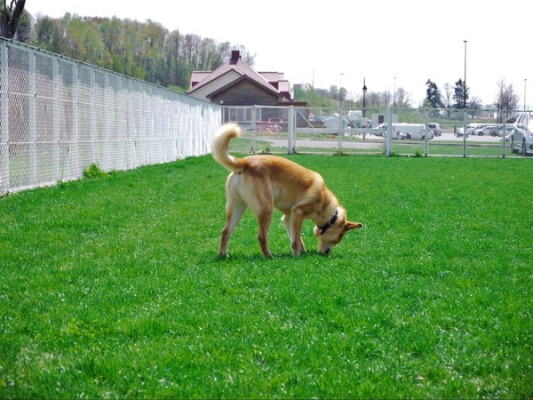 「ムーニャパーク」で気分転換を楽しむ愛犬