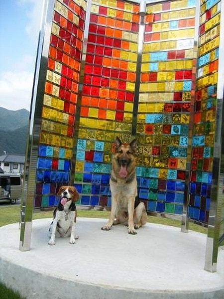 愛犬達、黄金崎クリスタルパークにて