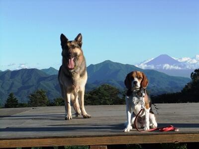愛犬たち、清泉寮にて