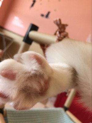 猫カフェ「ねこ茶」猫の肉球
