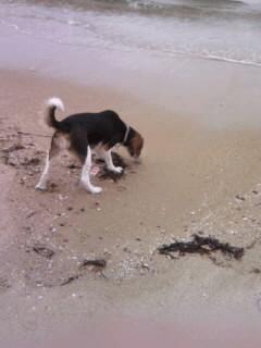 篠島の砂浜