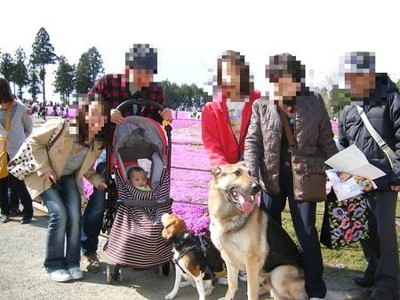愛犬達、羊山公園にて