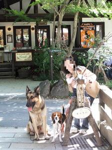 愛犬たち、萌木の村・キャロル前