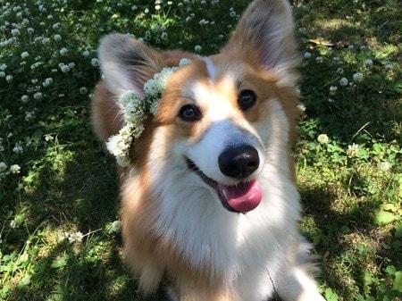 愛犬、県立観音崎公園にて、芝の上で満面の笑顔
