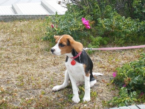愛犬。ノシャップ岬にて