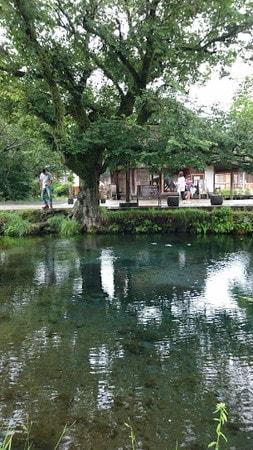 忍野八海湧池