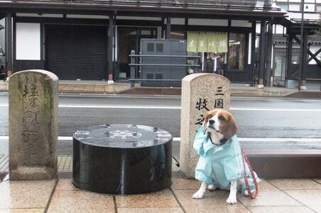 愛犬、塩沢宿にて