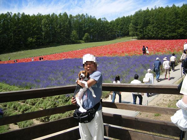 愛犬と、富田ファームにて