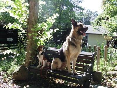 愛犬たち、萌木の村にて