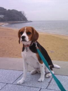 篠島海岸朝散歩