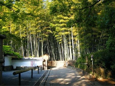 嵯峨野、竹林の小径