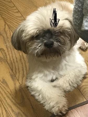 目が開かなくなったときの愛犬