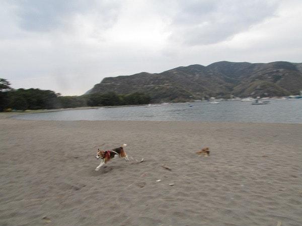 西伊豆戸田、御浜岬公園