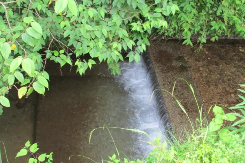 池の田んぼウォーキングコース