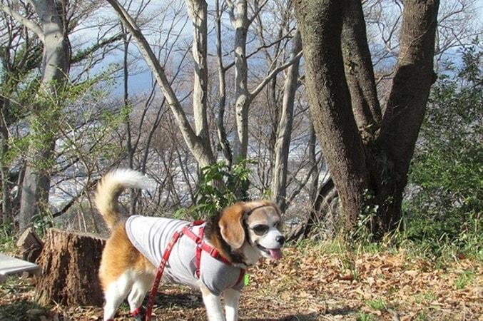 高麗山ハイキングコース