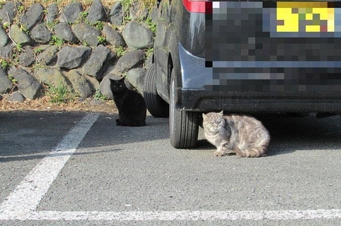 湘南平駐車場の猫