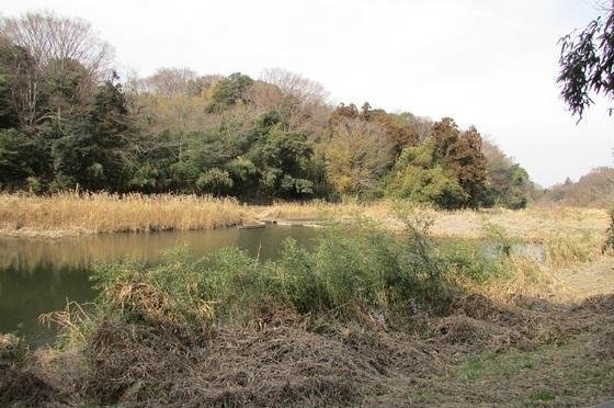 茅ヶ崎里山公園芹沢の池