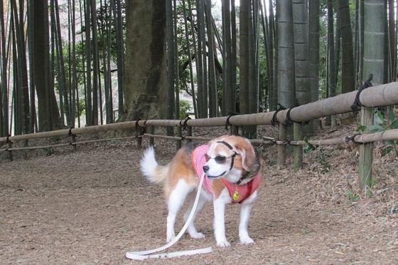 茅ヶ崎里山公園竹林