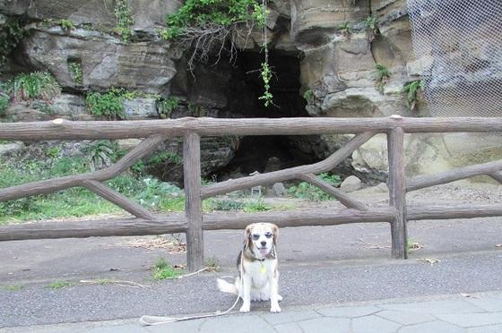 観音崎公園権現洞