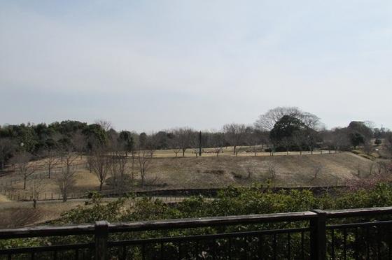 茅ヶ崎里山公園展望台