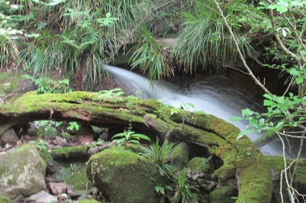 千条の滝手前の湧水