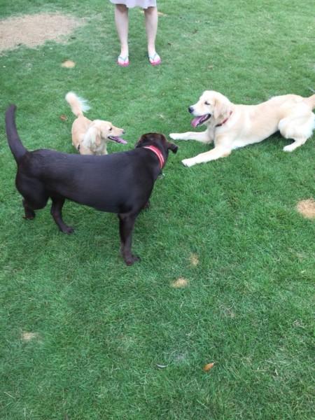 看板犬と遊ぶ愛犬