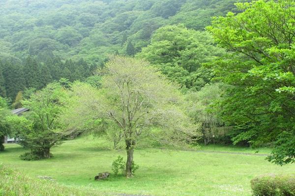 箱根 九頭龍の森