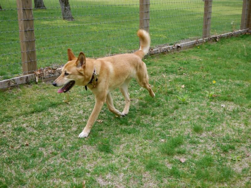 ノーザンホースパークドッグラン内の愛犬