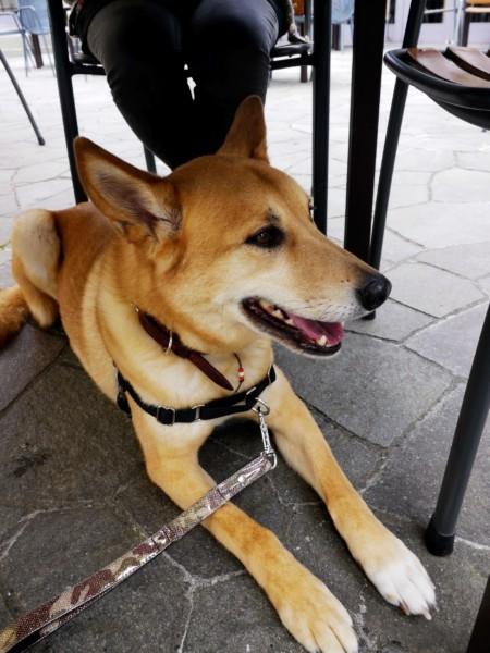 テラス席のテーブルの下で待機する愛犬