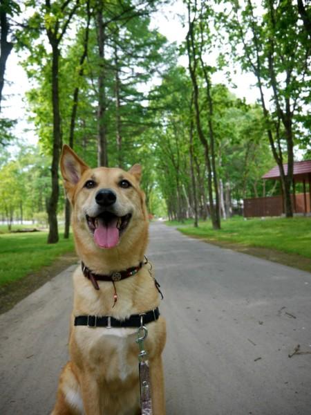 ノーザンホースパークの遊歩道をお散歩中の愛犬