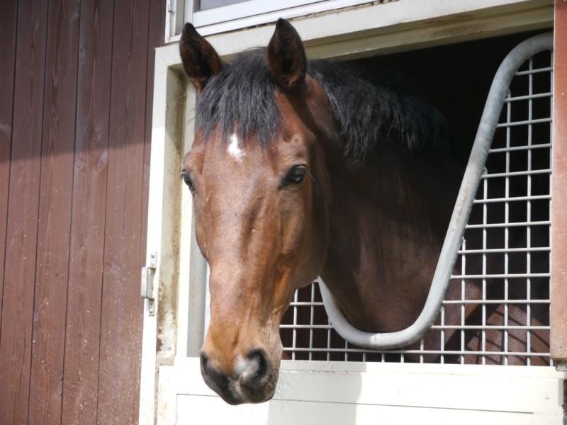 厩舎:人の気配を感じて顔を出す馬