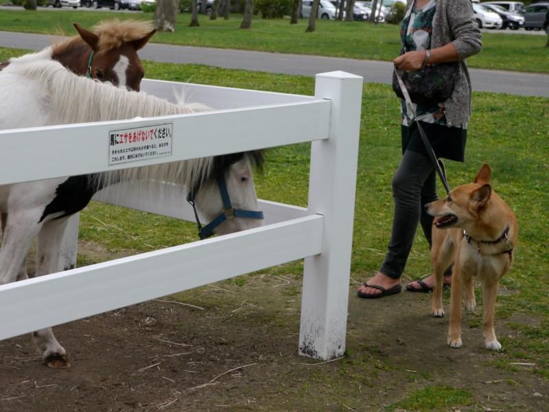 馬と挨拶する愛犬